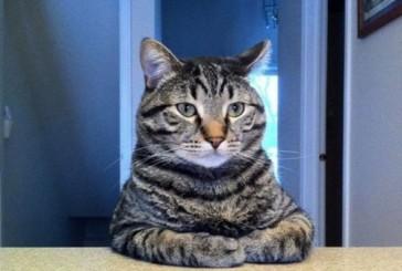 Крутые котики (23 фото)