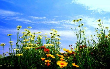 Цветы, девушки, природа…красота :)