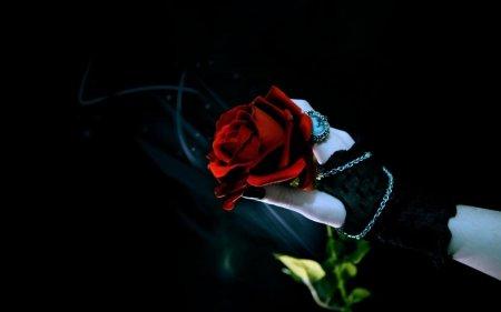 Цветы на темном фоне.