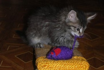 Замечательная котоматрица (27 фото)